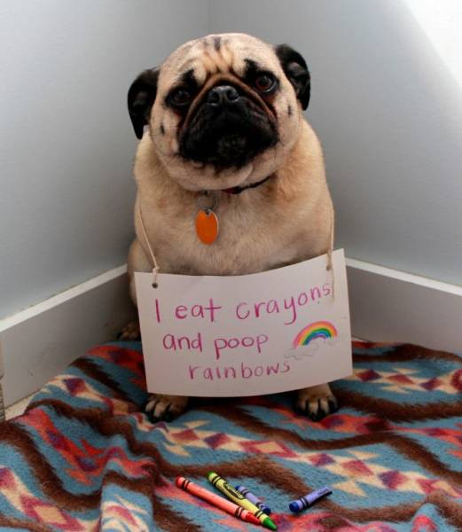 2019 Will Be The Year Of Dog Shaming!