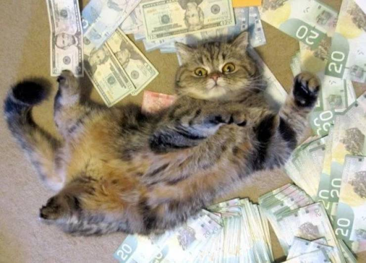 Cats Know What To Do With Your Money