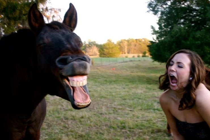 Animals Are Going To Take You For A Laugh