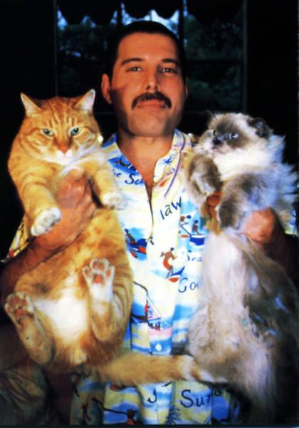 Freddie Mercury Was A Crazy Cat Guy!