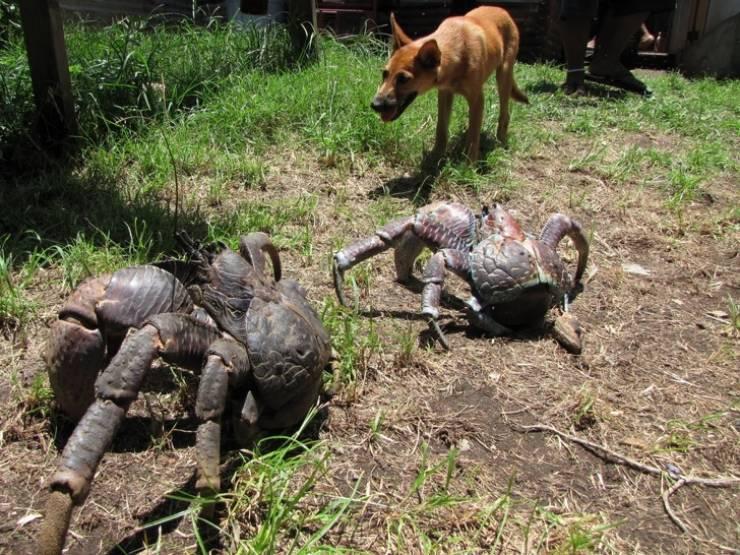 Ezek az állatok az egyéni méretre vágynak