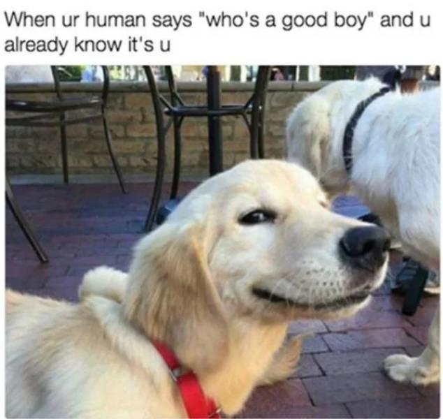 Woof, Dog Memes!