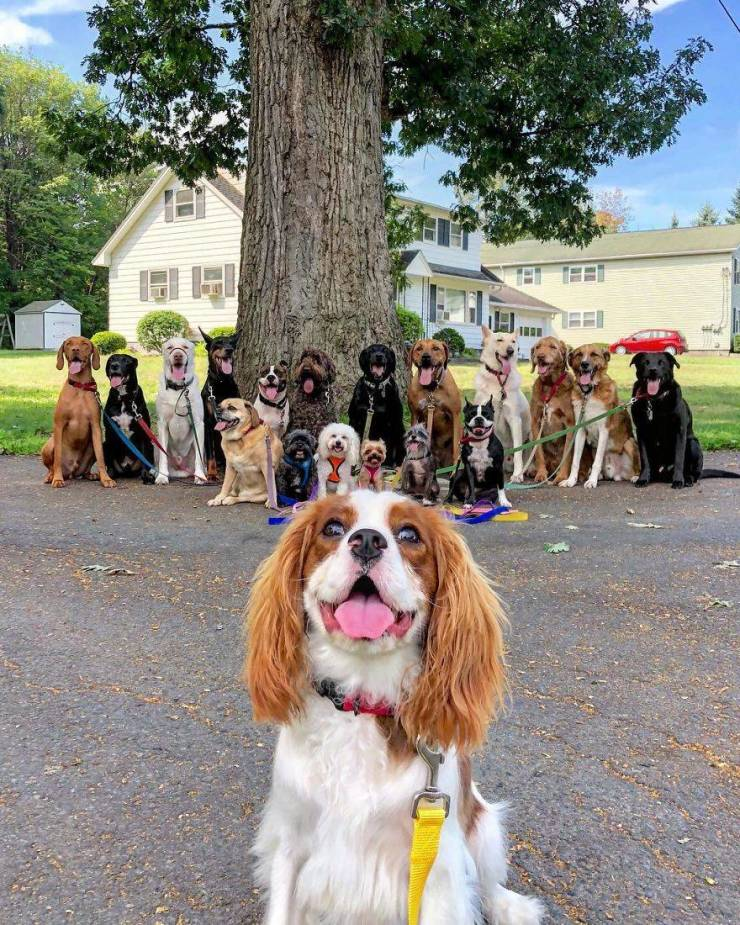 There Is A Real Dog Gang In New York