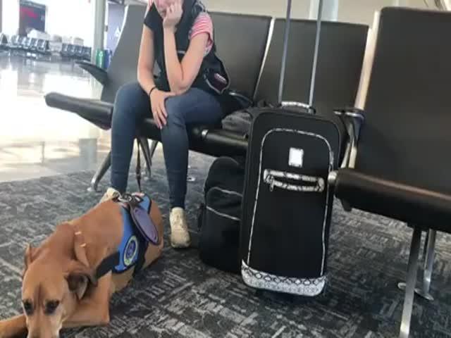 Service Dog Senses Owner's Panic Attack
