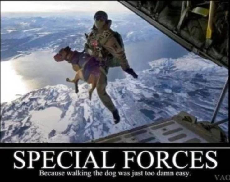 Incredibly Loyal Service Dog Memes