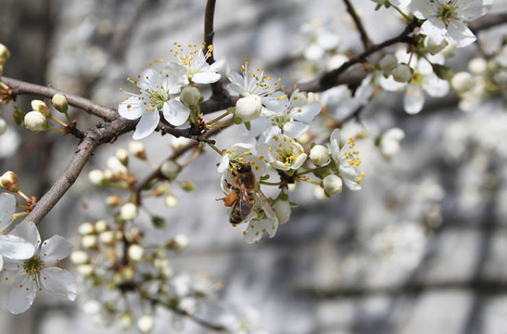 Why It Is Important To Save Bees And How To Do It