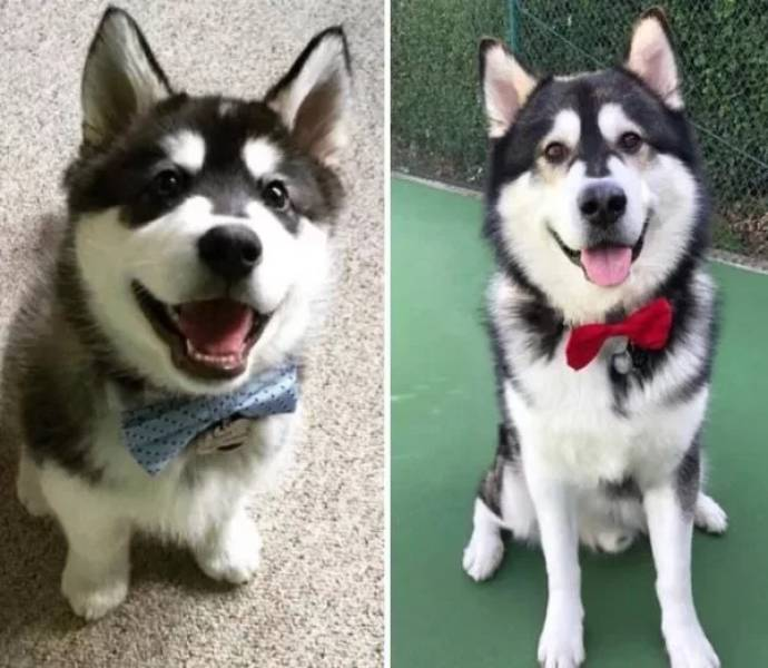 Dogs Are Cute No Matter How Old They Are