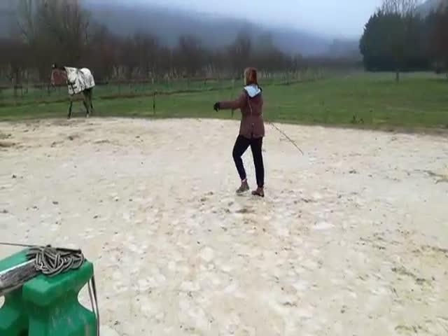 Look, I'm A Horse!