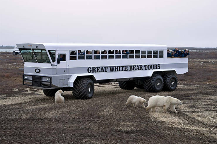 A Mobile Hotel Among Polar Bears