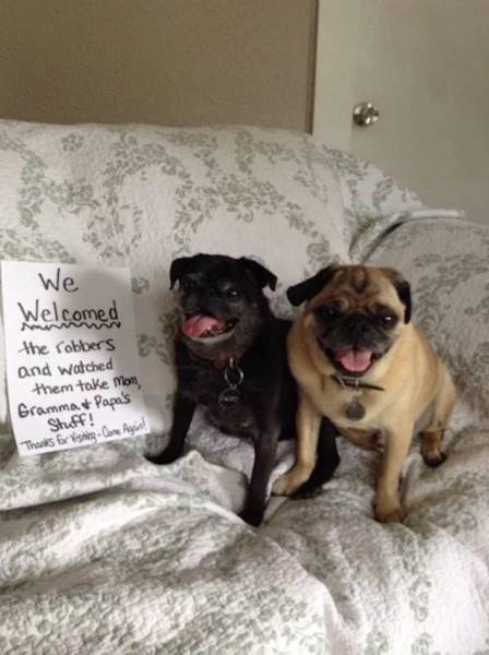 Pets Working Their Way Into The 'Hall of Shame'
