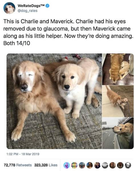 Seeing Dog Helps His Blind Friend, And It's Incredibly Adorable!