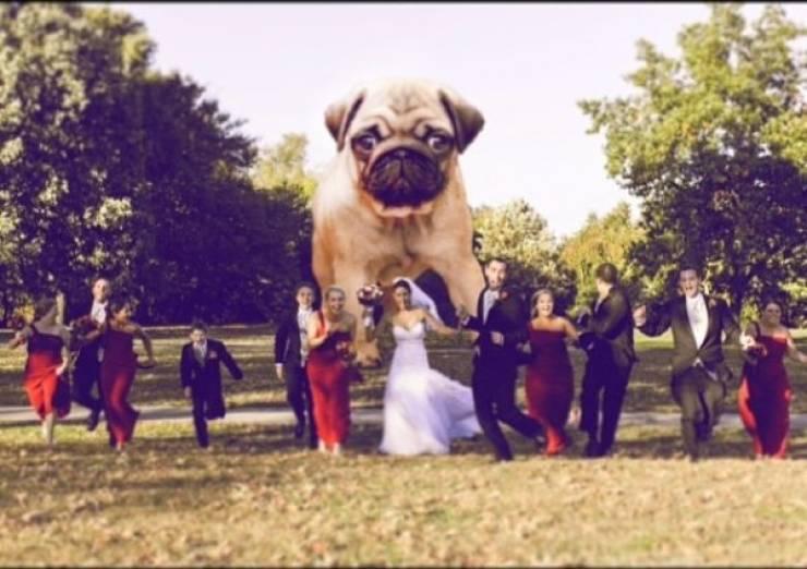 Wedding Photos Should Not Be Boring!