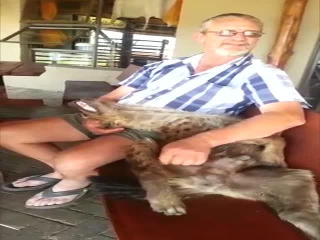 Ever Seen An Overjoyed Hyena?