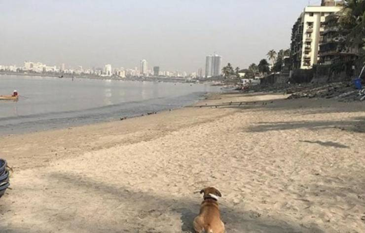 700 Tons Of Plastic Were Removed From Mahim Beach In Mumbai, India