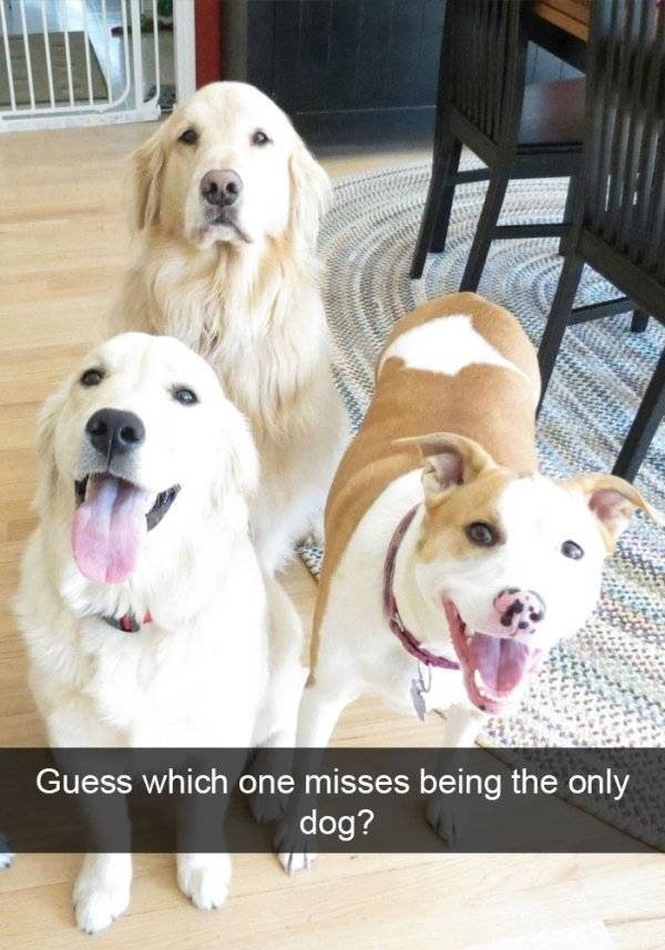 Woofchat At Its Best