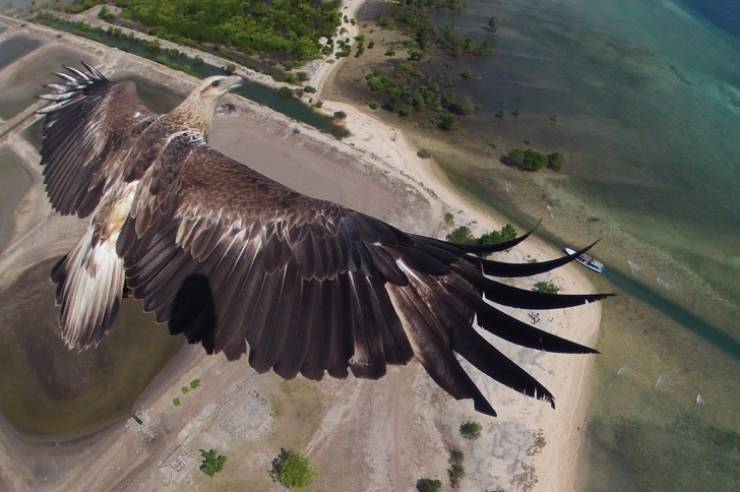 Bird's Eye Views Always Have Something Majestic About Them