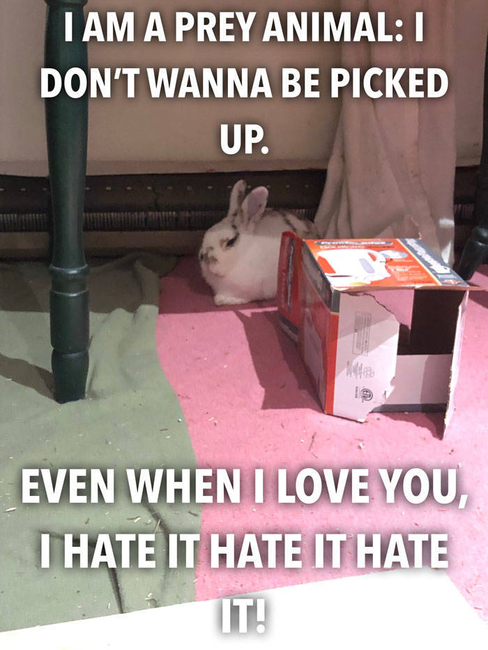 If You Want To Get A Bunny Before Easter – Don't Do It