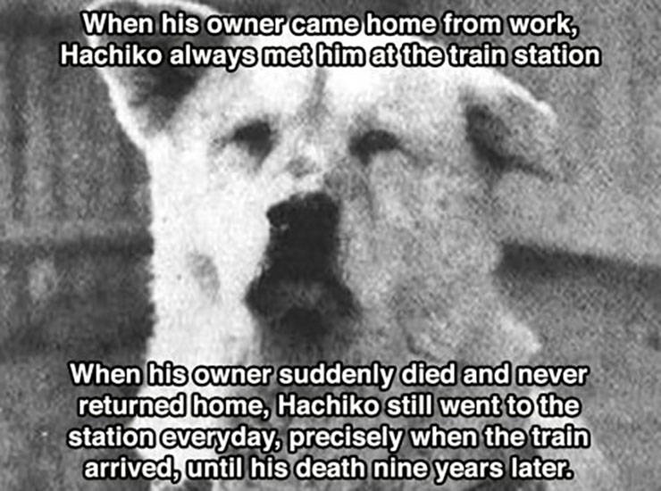 Dogs Could Be The Most Loyal Creatures In The World