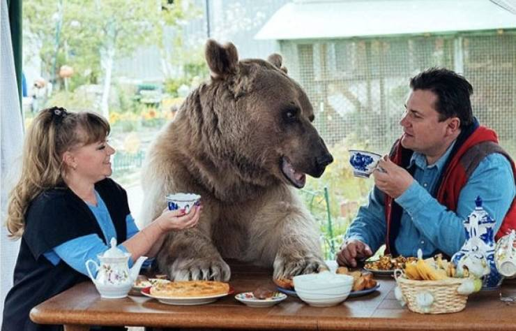 Bears Are Just Bigger Humans