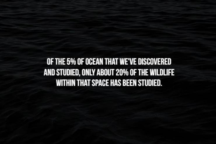 Creepy Facts To Start Your Week With: Ocean Edition
