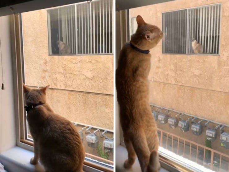 This Cat Friendship Story Is Better Than Any Hollywood Drama