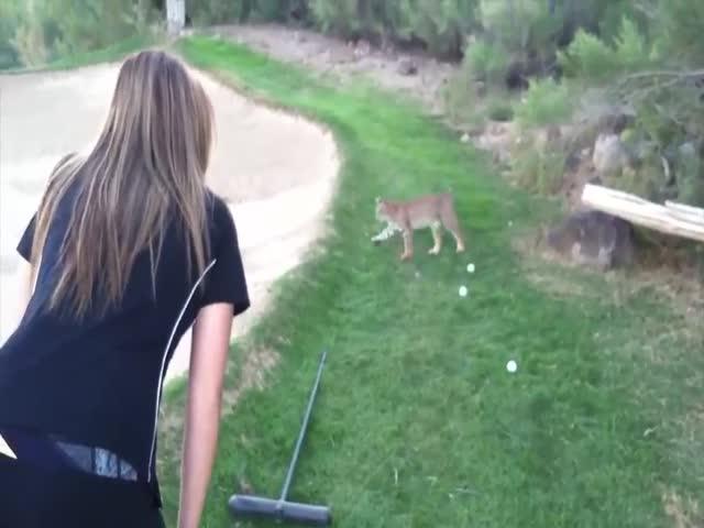 Cute Girl + Cute Bobcat = Perfect Video