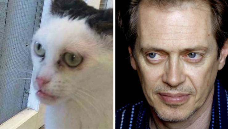 Is This Cat The Real Steve Buscemi?!