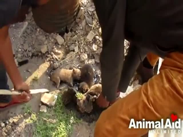 Saving Privates Puppies
