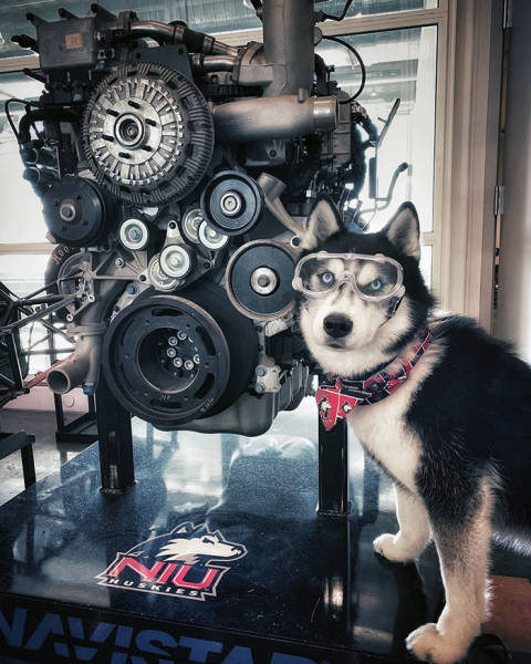 Employed Dogs Are Both Incredibly Dutiful And Adorable