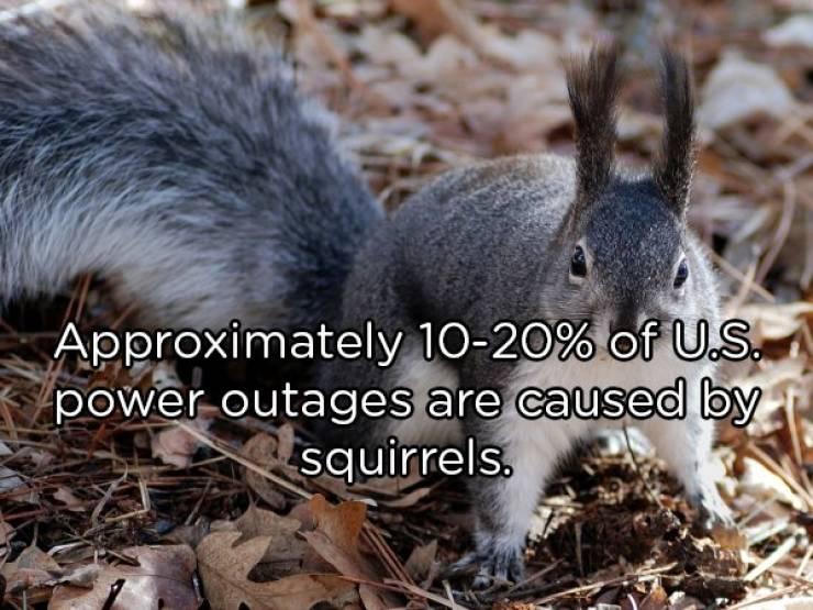 Random Facts Are Always Surprising