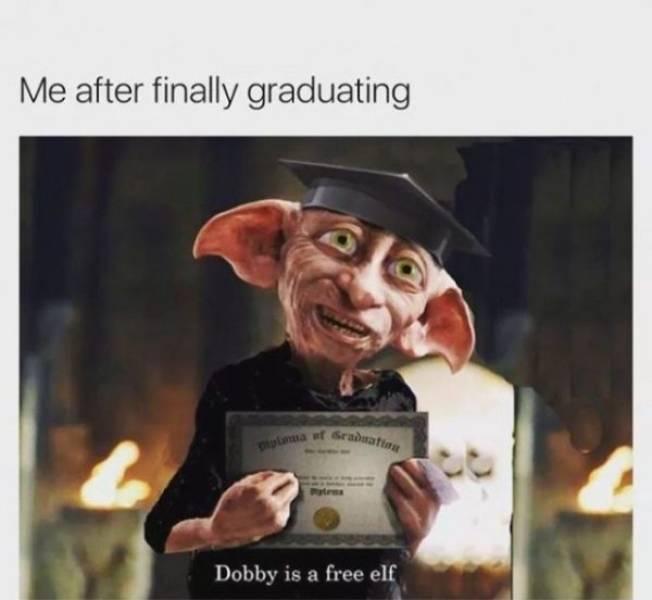 Image result for after graduation meme