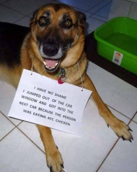 There Can Never Be Too Much Pet Shaming