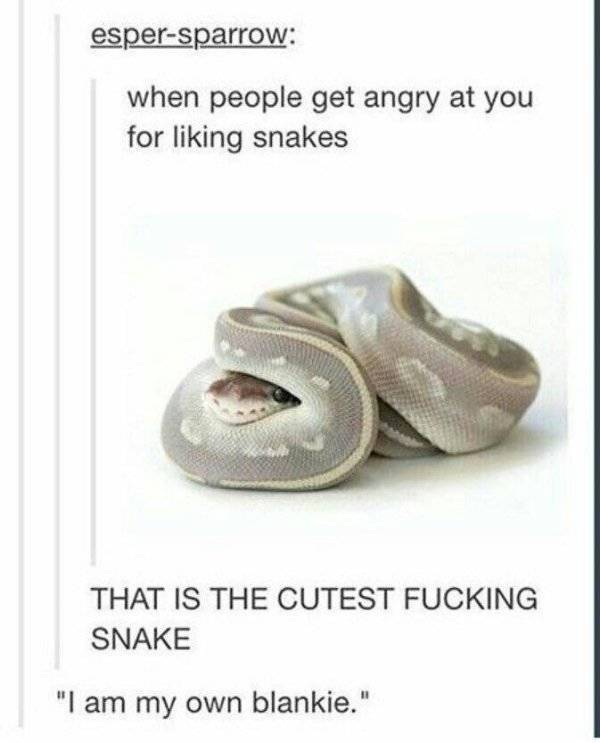 Not All Snakes Are Scary