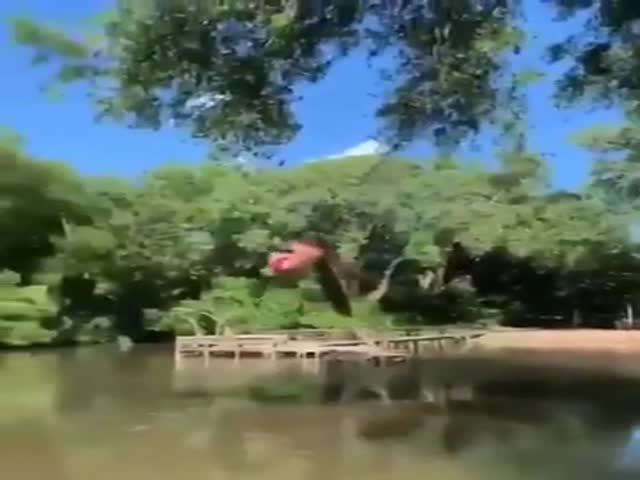 That's One Very Strong Branch!