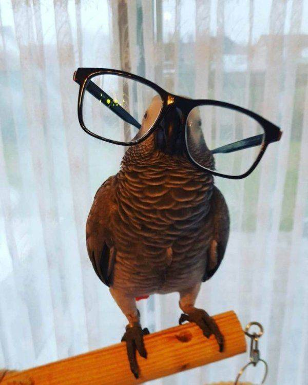 Animals Who Are Way Cooler Than You