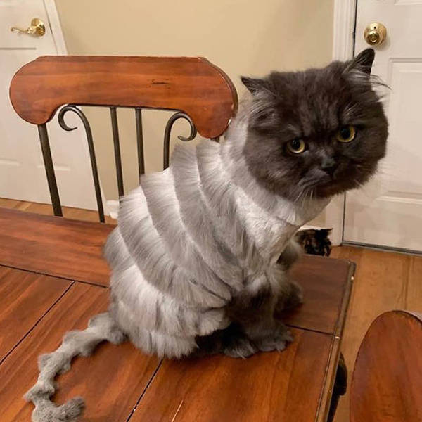 Look Honey, I Took Our Cat To Pet Groomer
