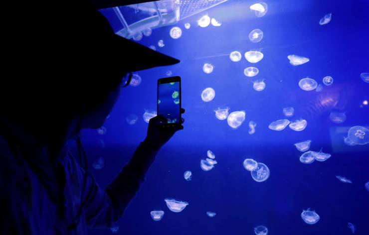 Wobbly Facts About Jellyfish