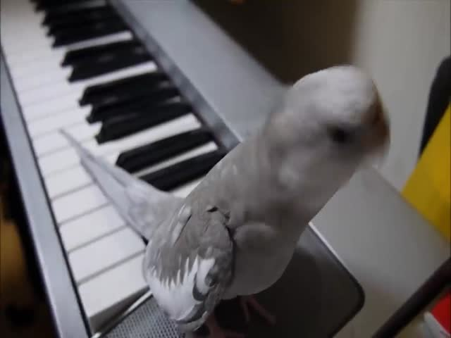 What An Adorable Little Singer!