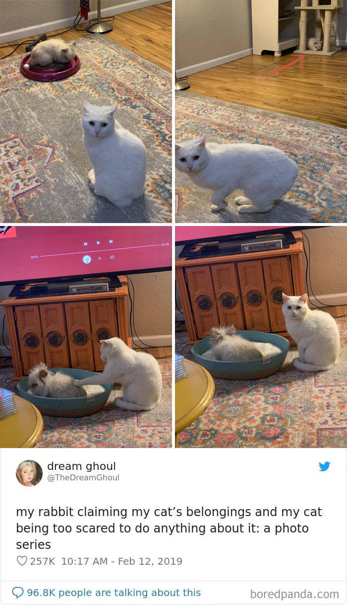 Funny Cat Tweets Are Purring Over