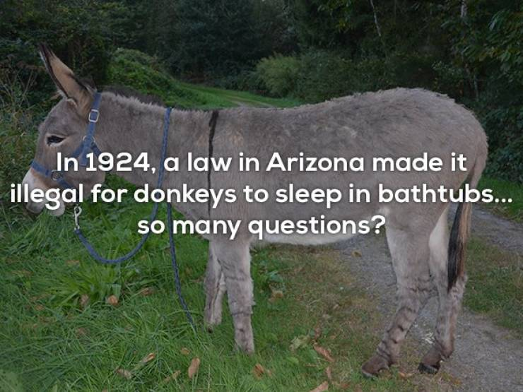 You Don't Even Need These Interesting Facts