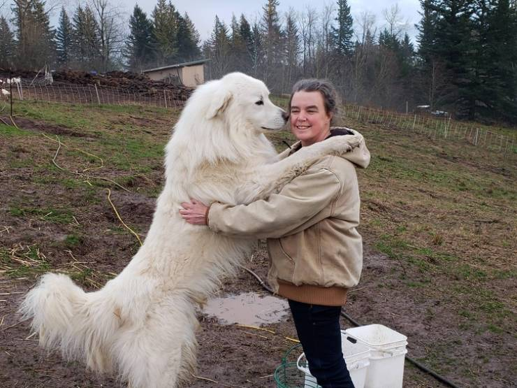 These Dogs Are Way Too Big