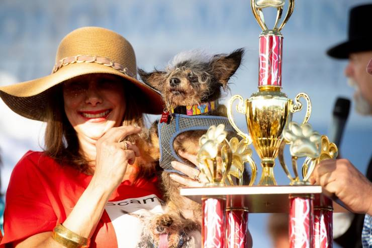 """Behold, """"World's Ugliest Dog"""" Contenders!"""