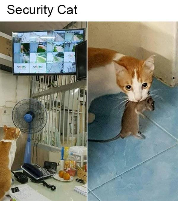 Cats Have To Earn Money, Too