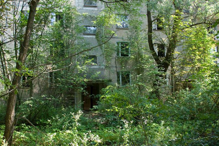 Nature Takes Chernobyl Back