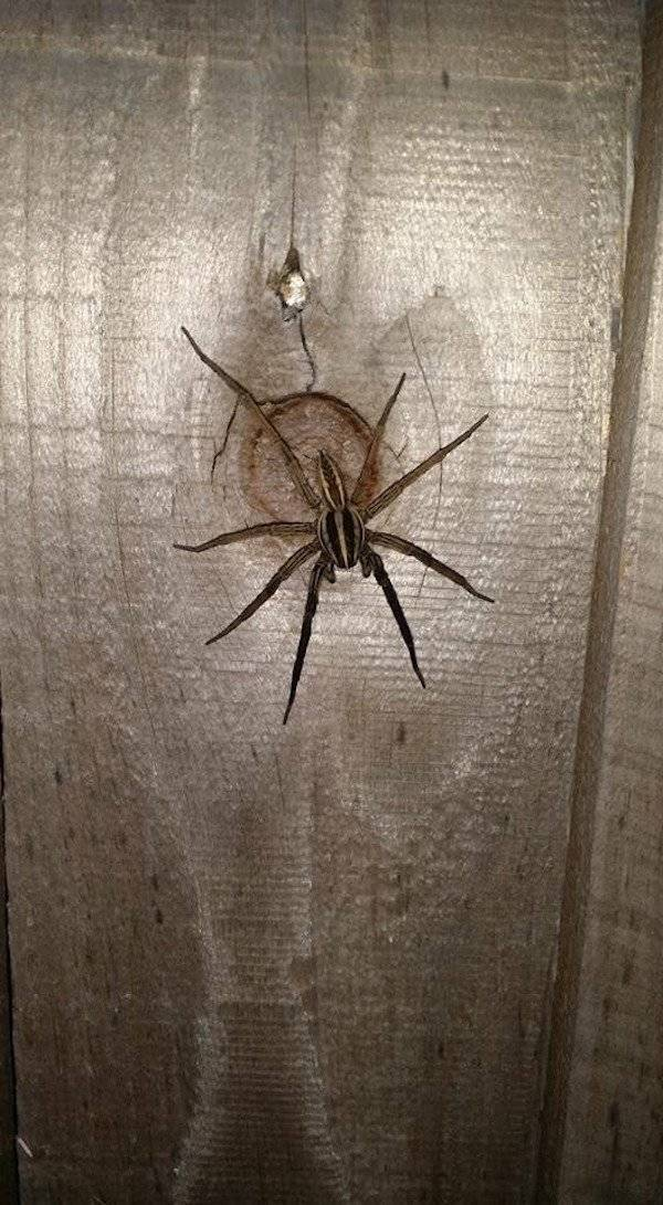 Some Excessive Amounts Of Nope