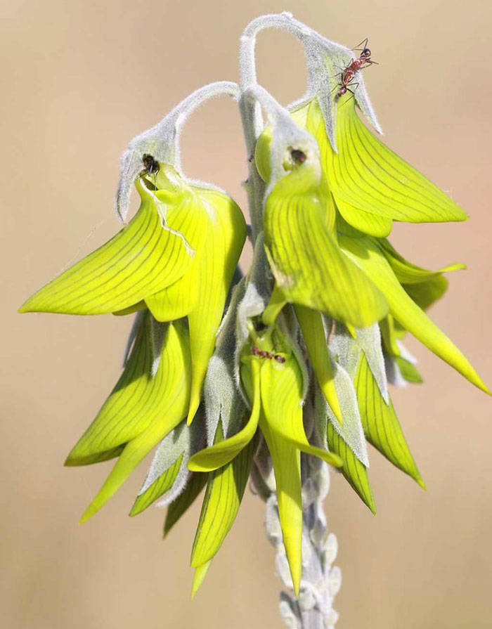 This Flower Looks Like It Attracts Hummingbirds. But It Doesn't