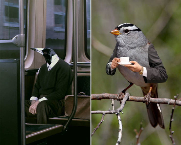 Birds Look Better With Human Arms…
