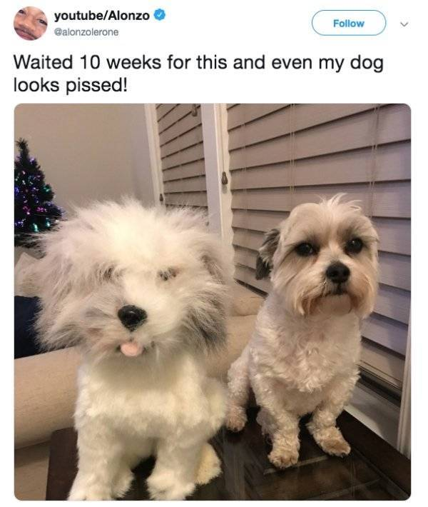 Dogs Who Have Had Enough