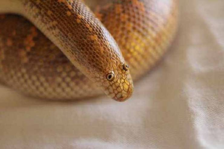 The Derpsnake Has Been Found!