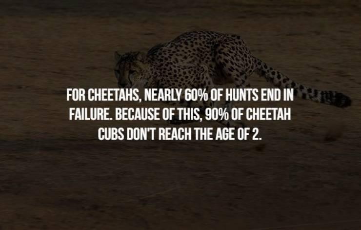 Animals Are Pretty Creepy Too